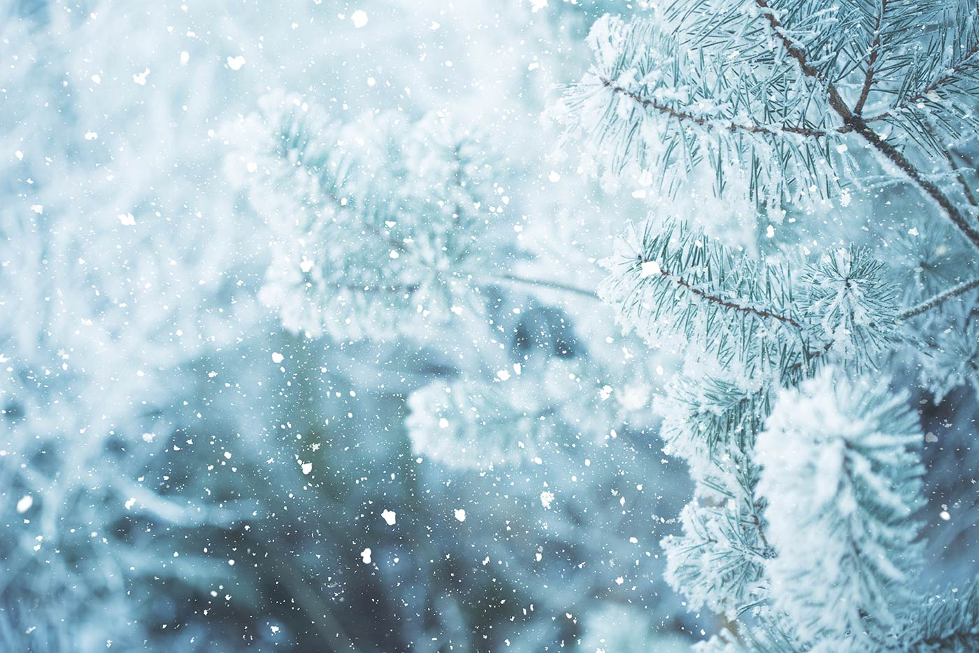 Wild Taiga winter