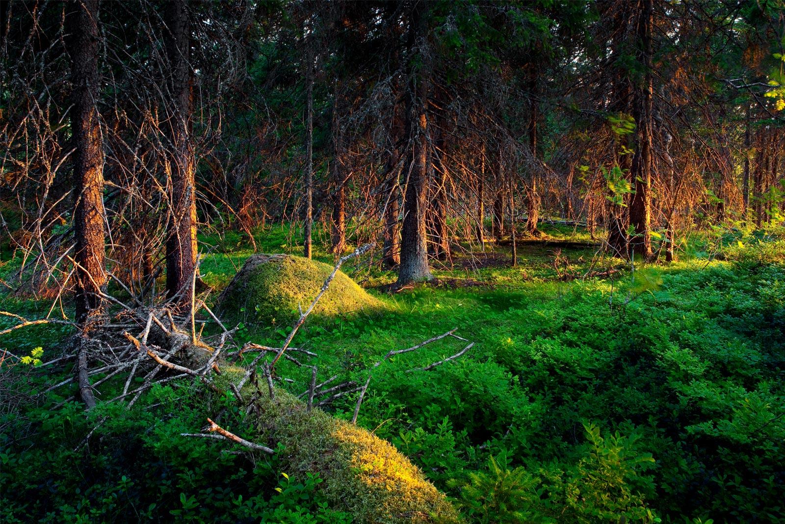 koskematon luonto erämaa wild taiga kuhmo suomussalmi